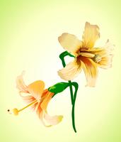 Vector illustration of beautiful detailed elegant flower 60016008069| 写真素材・ストックフォト・画像・イラスト素材|アマナイメージズ