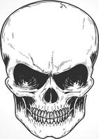 Vector illustration of detailed human skull