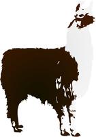 Vector image Llama