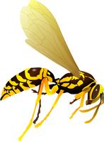 Vector drawing of wasp