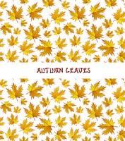 Vector autumn leaves background 60016010357| 写真素材・ストックフォト・画像・イラスト素材|アマナイメージズ