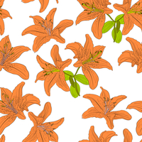 Seamless  background with flower lily. Could be used as seamless wallpaper, textile, wrapping paper or background 60016011115| 写真素材・ストックフォト・画像・イラスト素材|アマナイメージズ