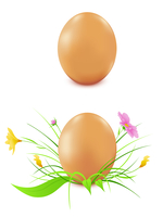 hen's eggs  on a white background, green grass and flowers