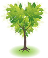 Green maple tree, heart shape
