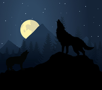 wolf3. Wild animal with burning eyes in night darkness. Vector illustration
