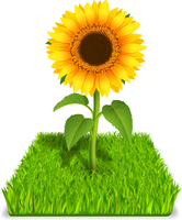 Realistic sunflower in the green grass vector illustration