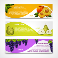 Mixed natural organic sweet fruits banners collection of pear peach and grapes for cafe dessert menu design template vector illu