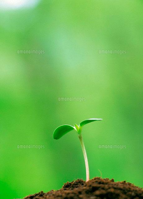 葉、芽、土[09517000325]の写真...