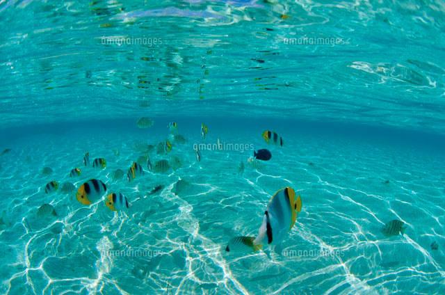 浅い海を泳ぐ魚[10129000382]| ...