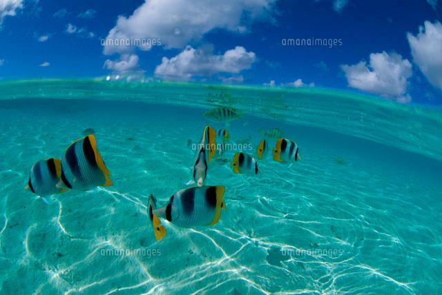 浅い海を泳ぐ魚[10129000392]| ...