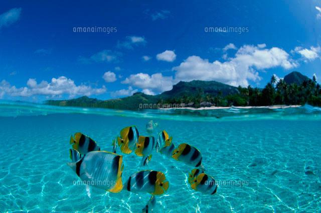 浅い海を泳ぐ魚と島[10129000398...