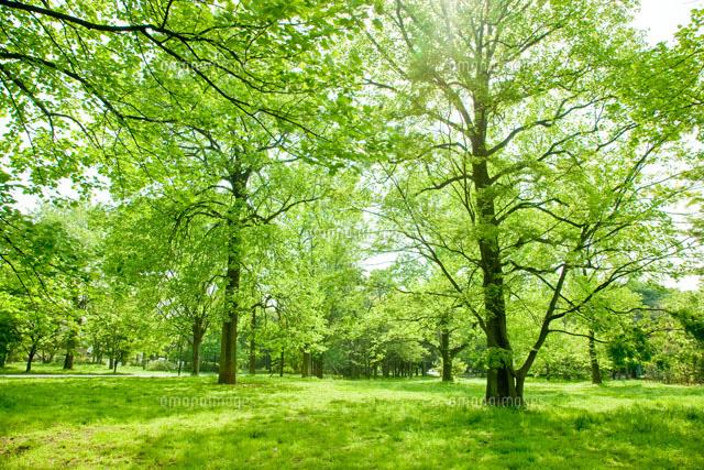 新緑の林[10134001673]| 写真素...