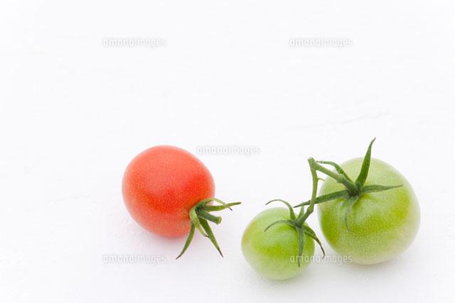 熟す前の青いミニトマトと熟した...