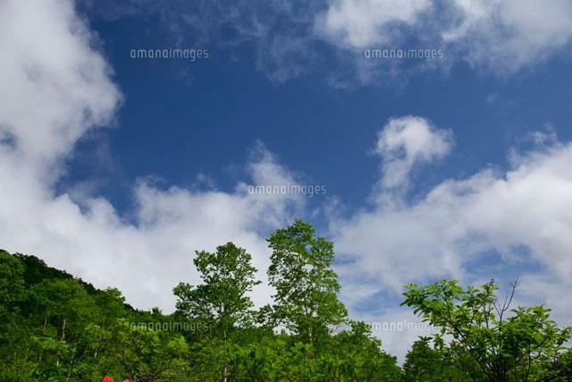 白樺林と沸き出す雲[10309000267...