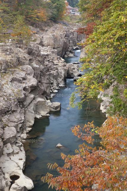 磐井川流れる紅葉の厳美渓[10790...