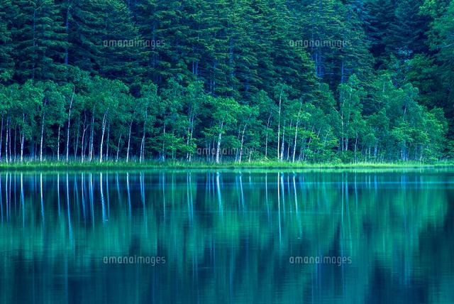木々の水面への映り込み[1085000...