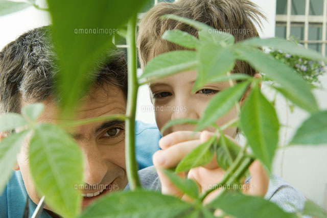 Father and son pruning plant together, smiling
