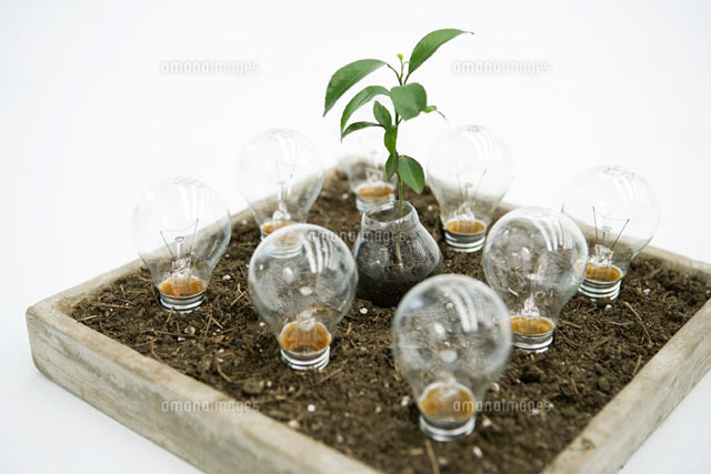 Seedling and light bulbs planted in tray of soil