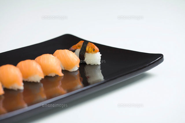 Goldfish prepared as nigiri sushi