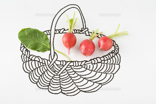 Fresh radishes in drawing of basket