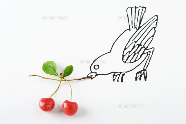 Drawing of bird carrying ripe cherries