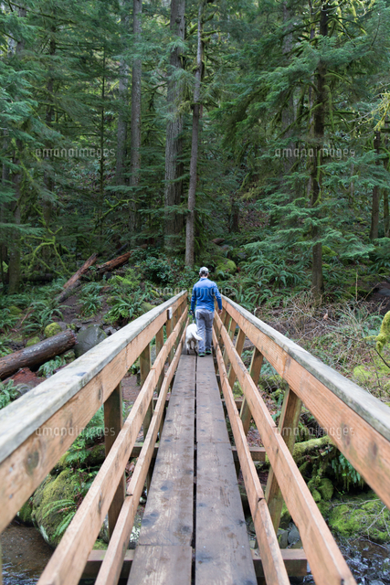 man and dog on wooden footbridge in forest 11015299129 写真素材
