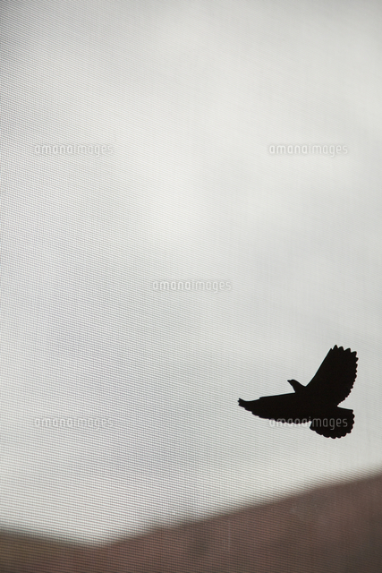silhouette bird flying in sky seen through curtain 11016028037