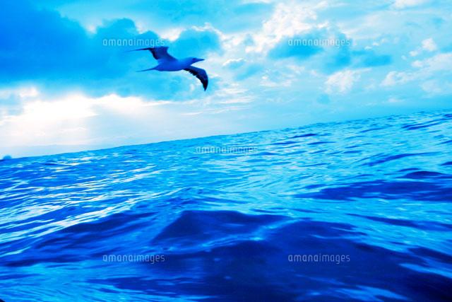 海原とカモメ[11019016948]| 写...