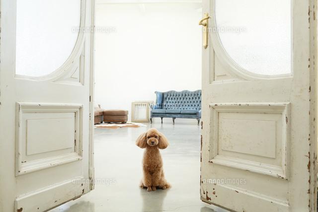 犬とアンティーク扉があるリビングルームの合成向け背景素材11038022667