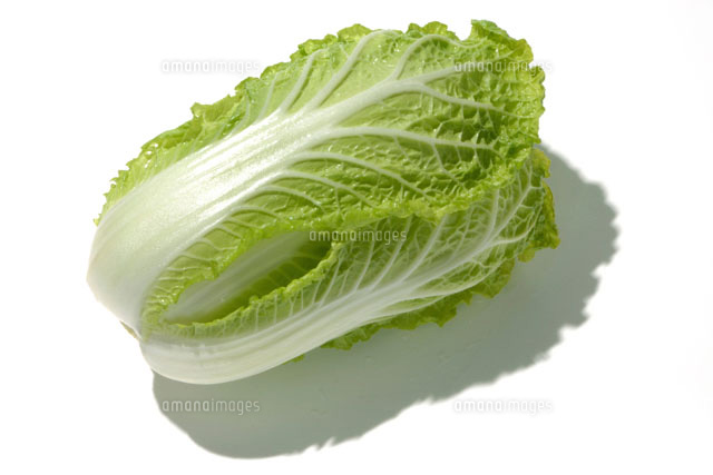 ミニ白菜[11074000692]| 写真素材・ストックフォト・画像 ...