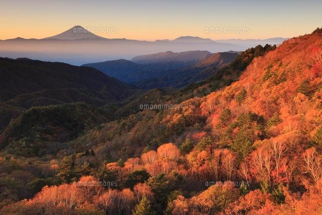 乙女高原より朝日差す紅葉と富士...
