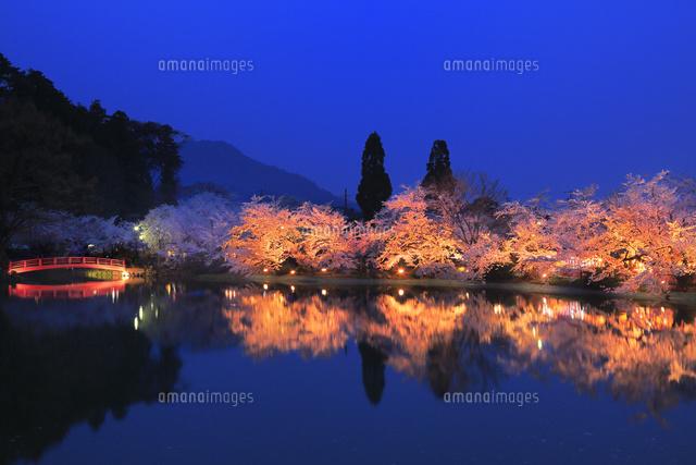 須坂・臥竜公園の夜桜[110760300...