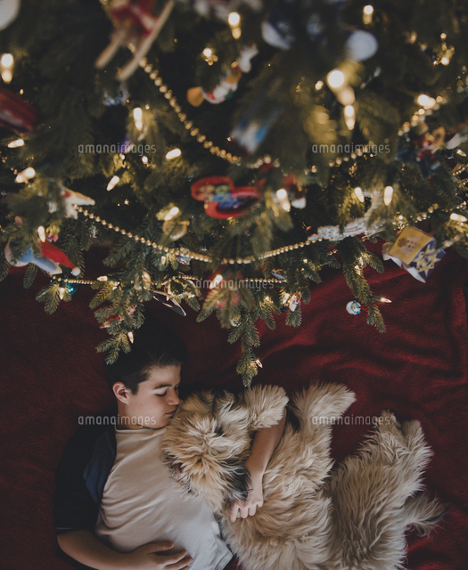 Overhead view of boy with dog lying by Christmas tree at home