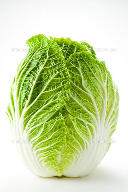 白バックの白菜[28056001055]  写真素材・ストックフォト・画像 ...