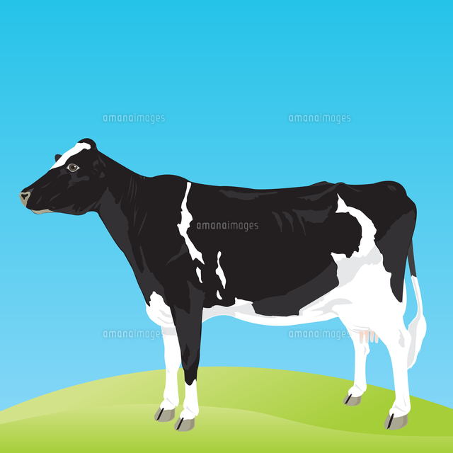 cow the black and white cow costs on a meadow a vector