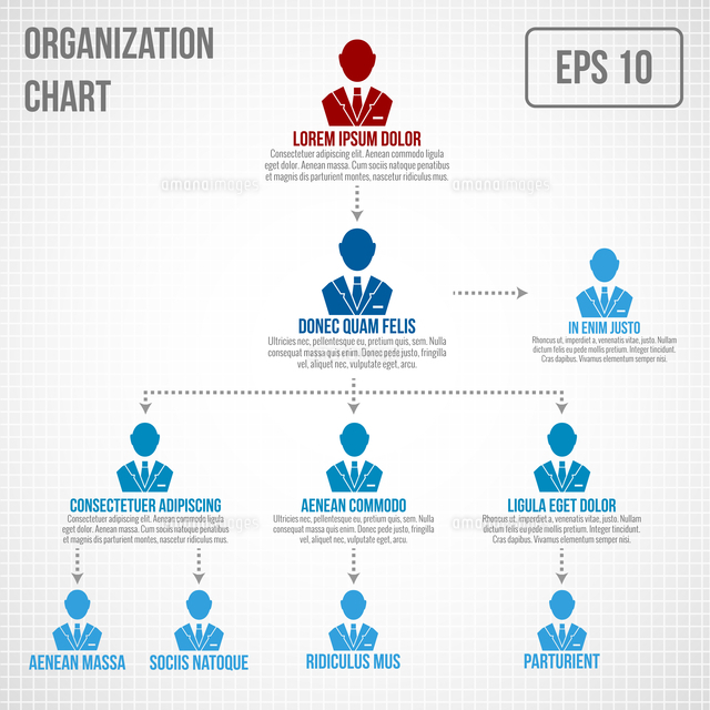 organizational chart infographic business hierarchy boss to employee