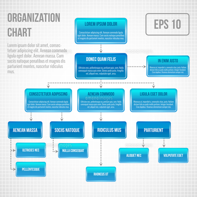 organizational chart infographic business structure concept