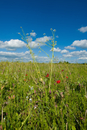 Field of wildflowers with long grasses and blue sky