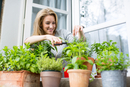 Woman clipping herb plants on windowsill