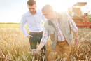 Farmer and businessman in wheat field quality checking wheat