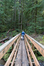Man and dog on wooden footbridge in forest