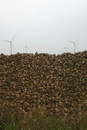 A pile of sugar beets in front of wind turbines