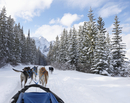 Dogs pulling dog sled in remote snow covered forest