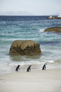 Three gentoo penguins on beach