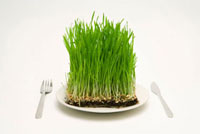 Grass served on a plate,with knife and fork 11010044258| 写真素材・ストックフォト・画像・イラスト素材|アマナイメージズ