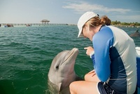 Young woman pointing at bottlenose dolphin 11015204290| 写真素材・ストックフォト・画像・イラスト素材|アマナイメージズ