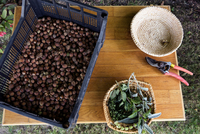 Crate of nuts on table in garden, overhead view 11015269848| 写真素材・ストックフォト・画像・イラスト素材|アマナイメージズ