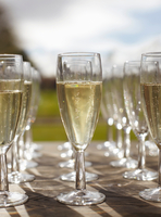 Rows of champagne in champagne flutes 11015279525| 写真素材・ストックフォト・画像・イラスト素材|アマナイメージズ