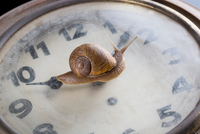 Snail moving over surface of old clock 11015289480| 写真素材・ストックフォト・画像・イラスト素材|アマナイメージズ