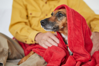 Owner wrapping dog in blanket 11015296983| 写真素材・ストックフォト・画像・イラスト素材|アマナイメージズ